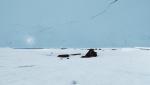 Myriad VR Experience Arctic Fox Northern Lights © Interactive Media Foundation